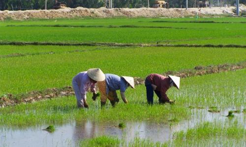 Voyage au Vietnam tout compris